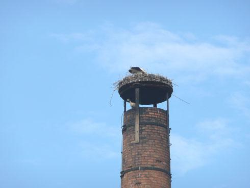 Brütender Storch mit Nilgans als Untermieter!   Foto: Ulrike Mos