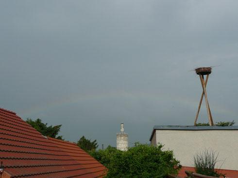 Storchenhorst IV Riedinger.    Foto: Ulrike Mose