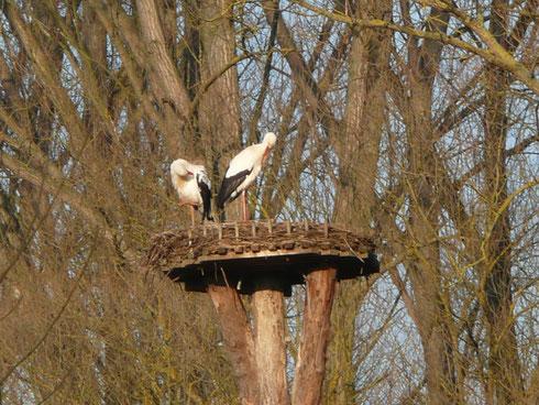 Storchenhorst I Ederauen    Foto: Ulrike Mose