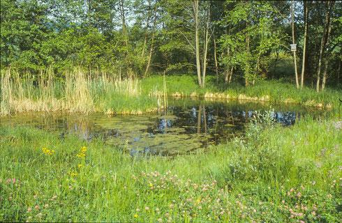 Feuchtgebiet Heuerbach