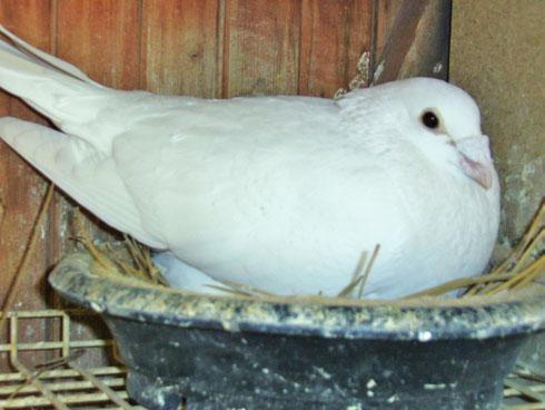 Das ist der Stammvogel 580