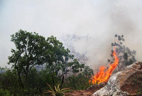 Waldbrand in Shewula