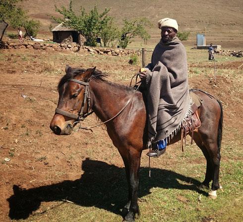 Ponys sind in Lesotho ein ideales Transportmittel