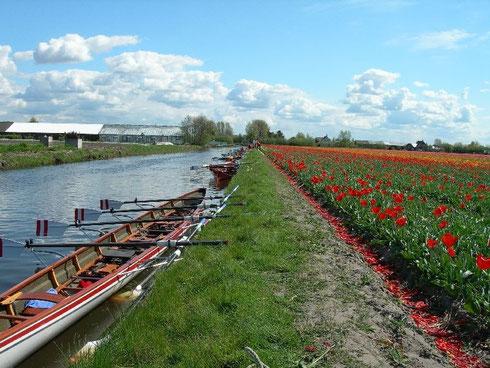 The Leidsevaart, canal entre les villes de Haarlem et Leiden, bordé de tulipes