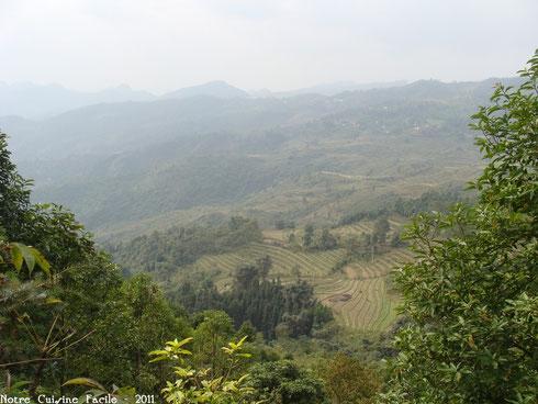 Culture en terrasse dans la région de Lao Cai (extrême Nord du Vietnam)
