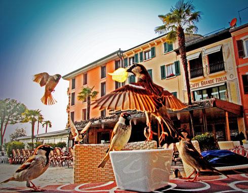 Ein mutiger Spatz fliegt in Sirmione am Gardasee, Italien, mit seiner Beute, einem Kartoffelchip, unter den bewundernden Augen seiner hungrigen Artgenossen davon. Sirmione Award. Foto: Tobias Bunners