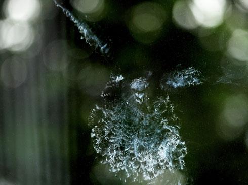Selfie. Abdruck eines Vogels. Entstanden mittels puderproduzierender Federn beim Aufprall auf eine Fensterscheibe. Veröffentlicht in der BILD-Zeitung. Foto Tobias Bunners