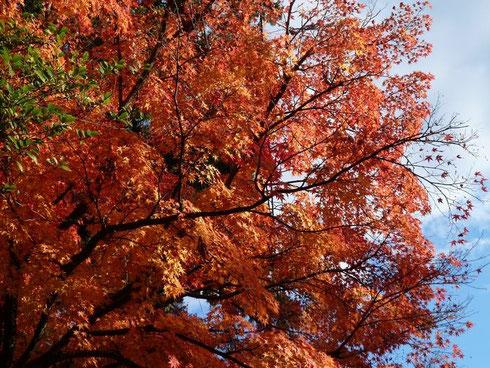 金劔宮の紅葉
