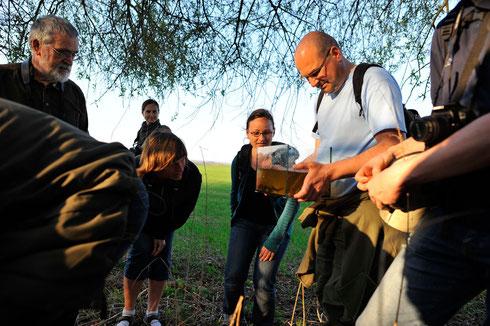 Amphibienexkursion bei Usadel mit reichlich Beute.