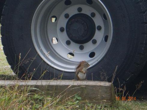 et l'écureuil