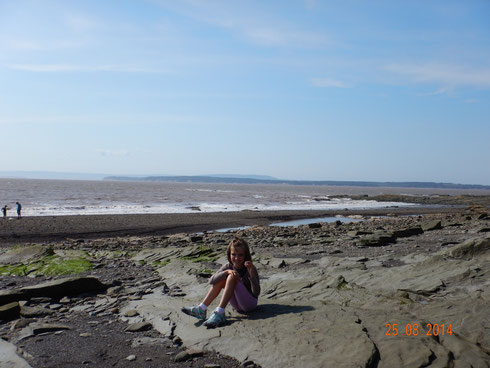 les falaises fossilifères de Joggins
