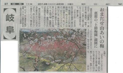 山あいの梅 平成26年4月3日 朝日新聞