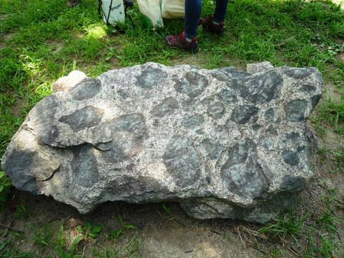 むろいけ園地森の宝島わいわい広場にある捕獲岩