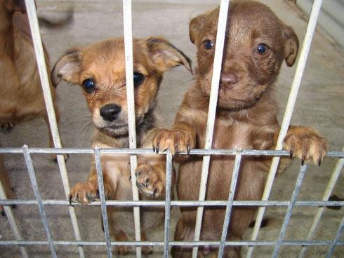 Mokka (rechts) durfte mit ins Refugio Esperanza