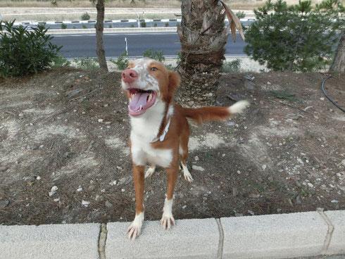 Pruna - Pippi Langstrumpf Hund sucht Villa Kunterbunt