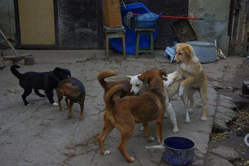Einige der Hunde, die zur Zeit bei Carmen leben