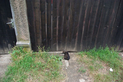 Bitte lass mich rein!