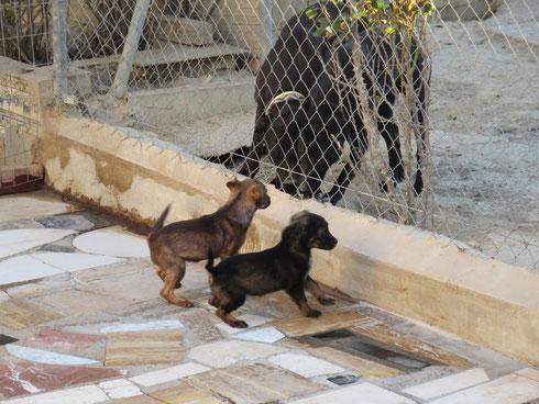 Mokka und Knöpfchen mit Afra und Simba