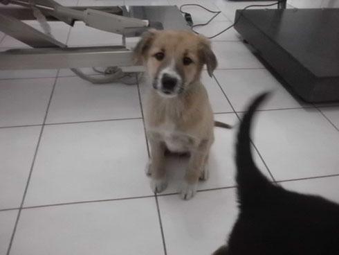 Impfung und Kastration der Hündin Amy von Tierhilfe Antalya eV