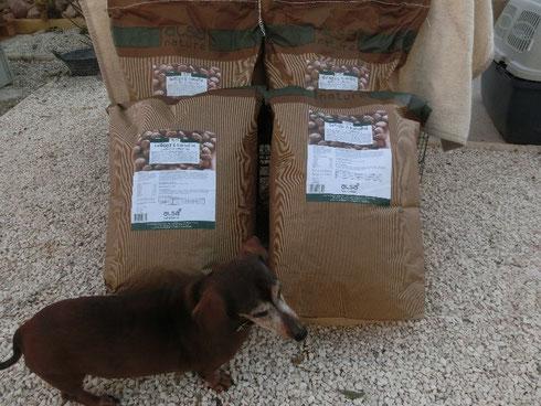Dackel Wera kontrolliert - zugegeben etwas neidisch - Curros Futtersäcke