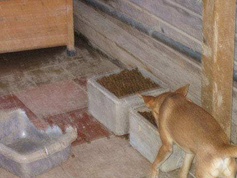 Basil freut sich über einen niedrigen Futternapf