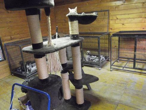 Katzenhaus und Hundequarantäne