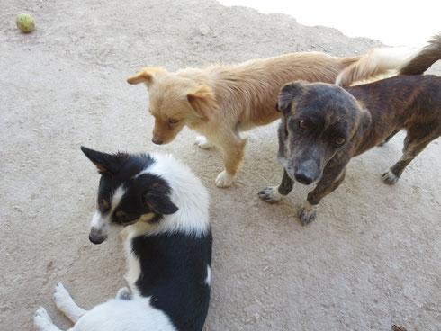 Mick, Pilar und Pepe