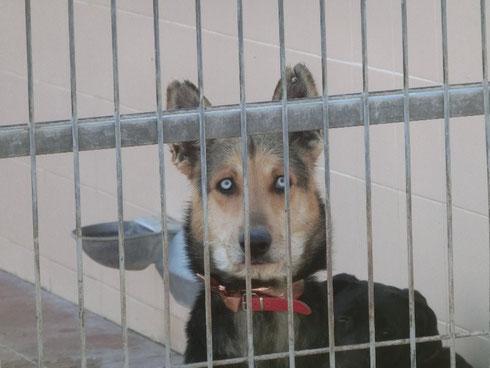 Dieser Hund hat wahnsinnig tolle Augen! Fast türkis!!!