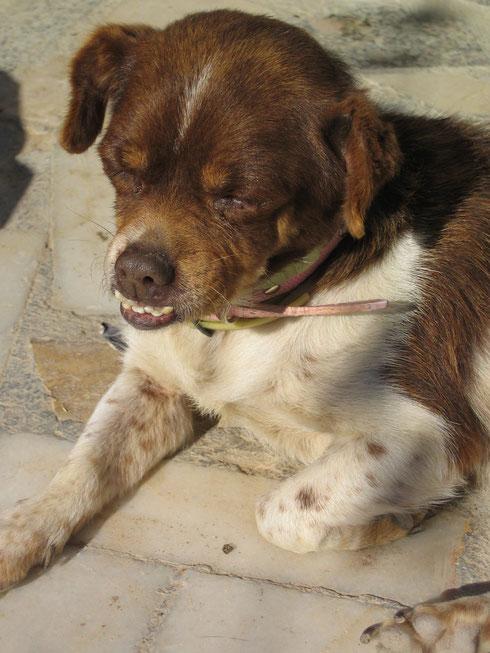 Canela - eine Hundeomi mit Besonderheiten