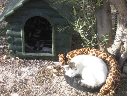 Vor dem Tor genießt eine Katze ungestört ein Sonnenbad