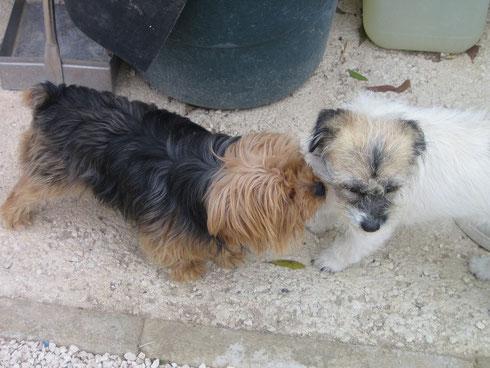 Josie und Berta