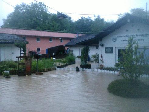Hochwasser im Tierheim Freilassing
