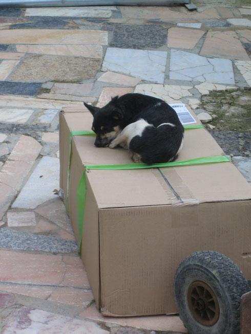 Viva: Das Paket ist für mich!