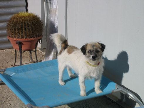 Berta hat eine Sonnenliege für sich alleine ergattert
