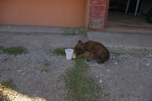 Wasser und Brot für ein Hundekind