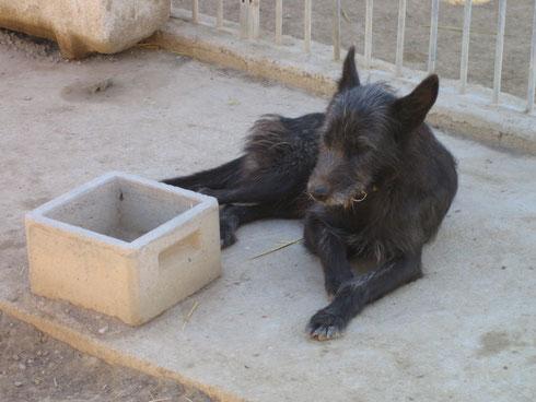 Curro II wartet darauf, daß sein Napf wieder gefüllt wird
