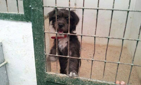 Hooway - Refugio de Mascotas, Spanien