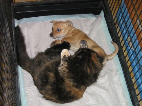 Mathilda und Welpe Elfie