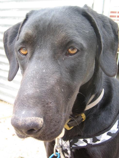 Ein toller Hund - die neuen Besitzer dürfen sich freuen!