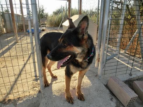 Curro hält Ausschau nach SEINER Familie