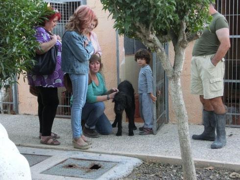 Ulises wird in der Perrera Bacarot abgeholt