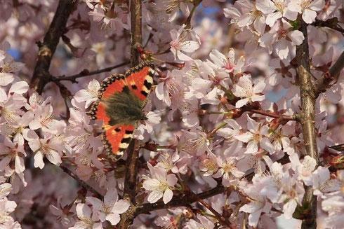 Vielen Dank an Herbert Lichtblau für die schönen Frühllingsfotos