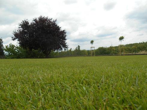 création pelouse gazon et plantation arbres