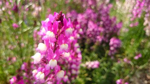 20140402花