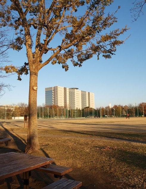 12月17日(2013) 公園と巨大なビル(武蔵野市:NTT研究開発センター)