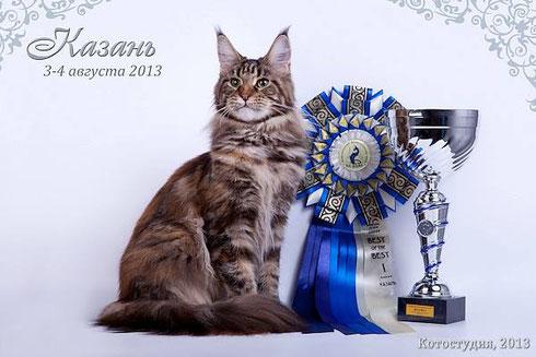 Verona De Luna of Absolutcats, вл. Дарья Куц