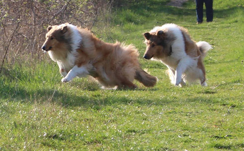 the happy, handsome & healthy dogs