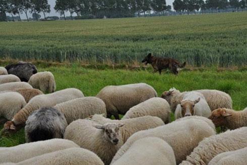 Faido tijdens een van de trainingen in Zeeland