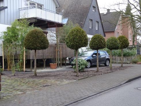 Kueglbäume, Gartenplanung Hamburg