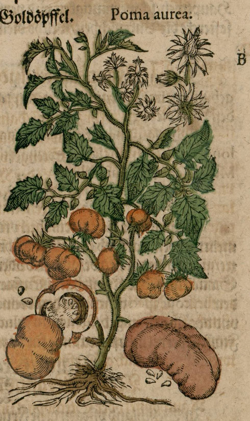 Pomo aurea Pietro Andrea Mattioli 1626